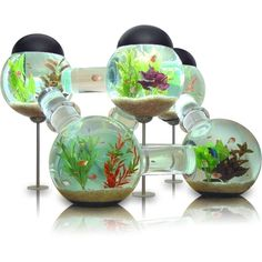 I would love this kind of fish tank!