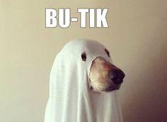 100 Genius Pet Costumes for Halloween via Brit + Co. Best Dog Costumes, Pet Halloween Costumes, Pet Costumes, Dog Halloween, Funny Halloween Costumes, Homemade Halloween, Halloween 2017, Happy Halloween, Funny Animal Pictures