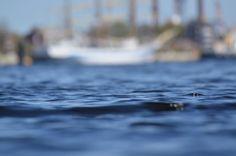 In the harbour. #wilhelmshaven #harbour #harbourview #mir #windjammer #water #ig_captures #landscapelovers #landscape #sunnyday #loveit #instagram #instagood #instapic #instalike #coast #seaside #weroamgermany #germany #japproves #straytocreate #heimathaven #hometown by js_ansichten