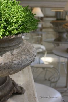 Planter with greens
