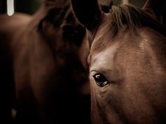 Corinna Schumacher Horses