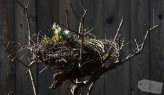 Blöd aber auch. Der Olivenbaum hat den Winter nicht überlebt. Jetzt schmückt er sich mit einem Krähennest und dient als Osterdekoration. Ein natürliches