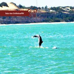 Além do visual paradisíaco, os golfinhos são uma surpresa aparte e podem ser avistados, principalmente, no início da manhã. Por estes pequenos e, ao mesmo tempo, grandiosos detalhes que fazem desta praia um local inesquecível.
