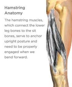 Healing (or Preventing) Hamstring Injuries Hamstring Pull, Hamstring Muscles, Lower Leg Bones, Lower Back Pain Exercises, Yoga International, Yoga Anatomy, Sprain, Knee Injury, Self Healing