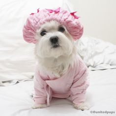 so cold today❄️⛄️ plz don't tell my cousin I'm wearing her babysuit. Anyways, I know I'm a boy but I still like pink ☝️ #arodwang #a_dogsworld #dressupyourpetday #maltese