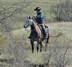 Flashy Grey Ranch Gelding for Sale - For more information click on the image or see ad # 60095 on www.RanchWorldAds.com