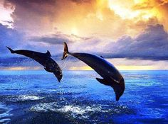 Some day I will swim with dolphins