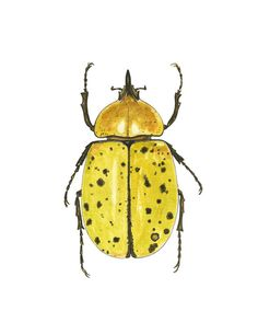 Entomology Beetle Art Print, Insect Bug Art , Entomology Art, Watercolor Bug…