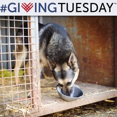 Giving Tuesday Food Drive for Animals at The Animal Rescue Site
