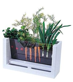 Watch your veggies grow!  (A great way to teach kids how vegetables grow)--a maybe an old fish tank could be used, too!