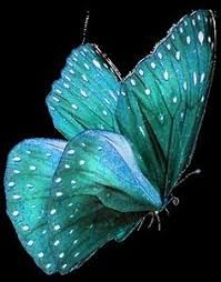 Image result for borboletas