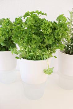 Eva Solo / Herbs