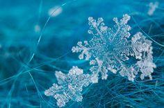 snowflakes alight atop the grass