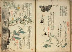 botanical: With insects.Japanese botanical: With insects. Japanese Drawings, Japanese Prints, Japanese Art, Japanese Culture, Botanical Illustration, Book Illustration, Botanical Prints, Korean Art, Asian Art