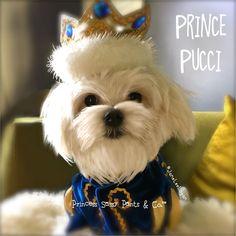 Prince Pucci...