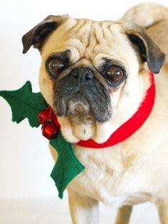 How To Make a Christmas Dog Collar: Dress your dog and take lots and lots of fun holiday pictures. From DIYnetwork.com