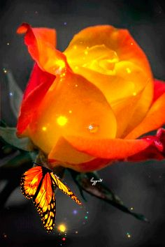 Beautiful Gif, Beautiful Roses, Beautiful Pictures, Beautiful Things, Butterfly Gif, Butterfly Wallpaper, Gif Pictures, Images Gif, Beautiful Butterflies
