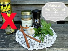 Natural Pest Control - Safe for Chickens, Other Pets and People ~ Fresh Eggs Daily