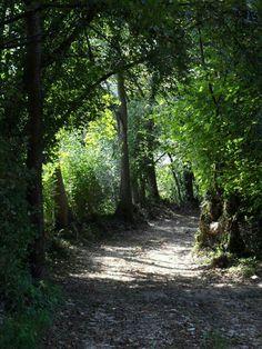 Passeggiata nel boschetto