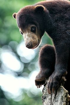 Little Bear byPrabu dennaga