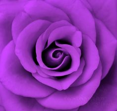 all the other colors are just colors, but purple seems to have a soul.