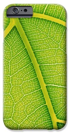 #Leaf Vein #iPhone 6s Case featuring the photograph Leaf Veins by Alfred Pasieka #phonecase #giftideas