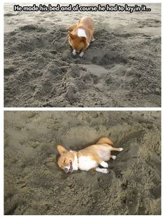 Corgi at the beach…so happy:)