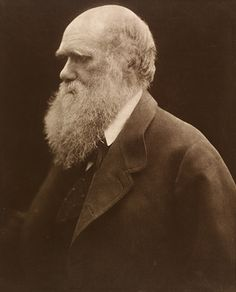 Charles Darwin, 1868, printed 1875 – by Julia Margaret Cameron, photographer | carbon print from copy negative | Victoria & Albert Museum | Museum no. 14-1939