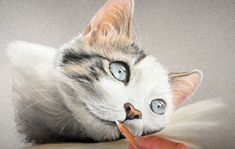 Learn how to draw a cat with pastels in this lesson that uses pastel pencils and traditional soft pastels. Orange Art, Yellow Art, Pink Art, Pastel Art, Blue Art, Cat Drawing Tutorial, Pastel Portraits, Pastel Pencils, Raining Cats And Dogs