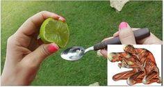 Recomendado por los doctores. Exprime un limón en aceite de oliva y no dejarás de hacerlo nunca más.