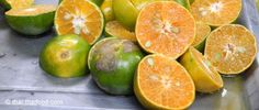 Orangen aus Thailand Orange, Thailand, Lime, Fruit, Exotic Fruit, Limes, Key Lime