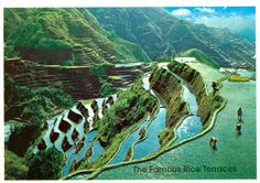Philippines - Rice Terraces Another Philippine Wonder The famous rice terraces of the Mountain Province is a breathtaking sight well worth the many hours spent to see them. postmarked with two 'Pigeon' stamps from the Philippines Philippines, Banaue, Stock Photo Sites, Angeles, Rice Terraces, The Real World, Travel Posters, Life Is Beautiful, Wonders Of The World