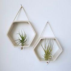 Planta de panal aire de porcelana soporte por RevisionsDesign