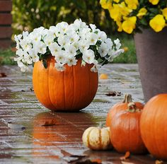 """Fall Flowers Planted in a Pumpkin"""