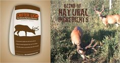 See photos of deer and other big game that have been brought in by Critter Lick - the ultimate big game and best deer attractant on the market.
