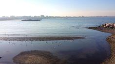gabbiani al sole seagulls in the sun