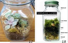 Bocal terrarium à faire à la maison Deco Nature, Spice Jars, Gardening For Beginners, Houseplants, Outdoor Gardens, Mason Jars, Spices, Diy, Vase