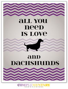 All you need is love and dachsund... All you need is love Is a Beatles song... Dachsunds my favorite type of dog