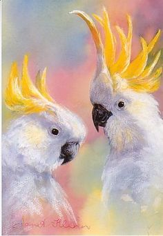 Print of Sulphur-crested Cockatoos by Janet Flinn
