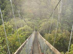 size: Photographic Print: Swingbridge, Motu Falls Poster by Jochen Schlenker : Framed Canvas Prints, Canvas Frame, Yosemite National Park, National Parks, North Island New Zealand, Pedestrian Bridge, Cool Posters, France Travel, Scenery