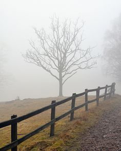 Misty morning on the farm...(by sea kay)