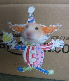 O Que Fazer Com Um Hamster