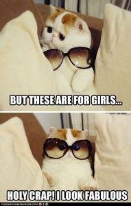 Now I'm a cat, and now I'm a cat owl..hehehe..meeoowwwlll !
