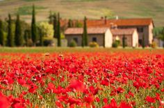 Tuscany. Been there but not in time to see the poppy fields, would love to go back one day! Maybe for another anniversary - like, our 20th?!