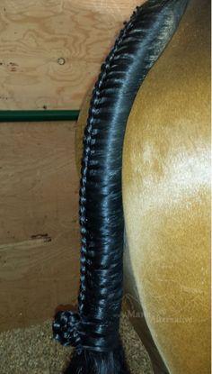 Hunter Horse Tail Braid. Jumper Equitation braids. Inverted French with pinwheel. Dutch. By Mane Alternative.:
