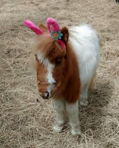 Beautiful Horse Pictures — Easter Ears | Horses#horses See the beautiful...