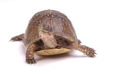 Pet Turtle care: Creating Turtle Ponds | Pet Turtle Care