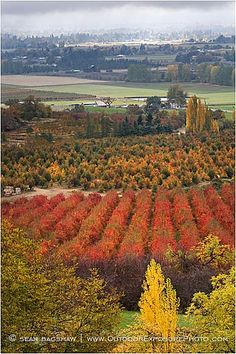 Orchards in the Fall | Rogue Valley, Oregon  //by Sean Bagshaw