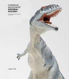 The Safari Ltd®Carnegie collection Giganotosaurus throws his enormous head back in a razor-toothed bellow. Learn more about this and other prehistoric creatures at the Carnegie Museum of Natural History