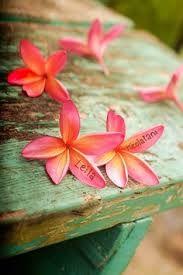 Love these flowers Tropical Vibes, Tropical Paradise, Tropical Flowers, Hawaiian Flowers, Hibiscus, Surf, Aloha Hawaii, Honolulu Hawaii, Tropical Fashion